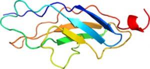 Proteina titina (conectina).
