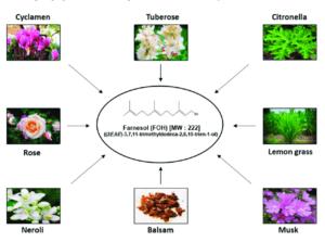 Various natural sources of farnesol; Diverse surse naturale de farnesol.